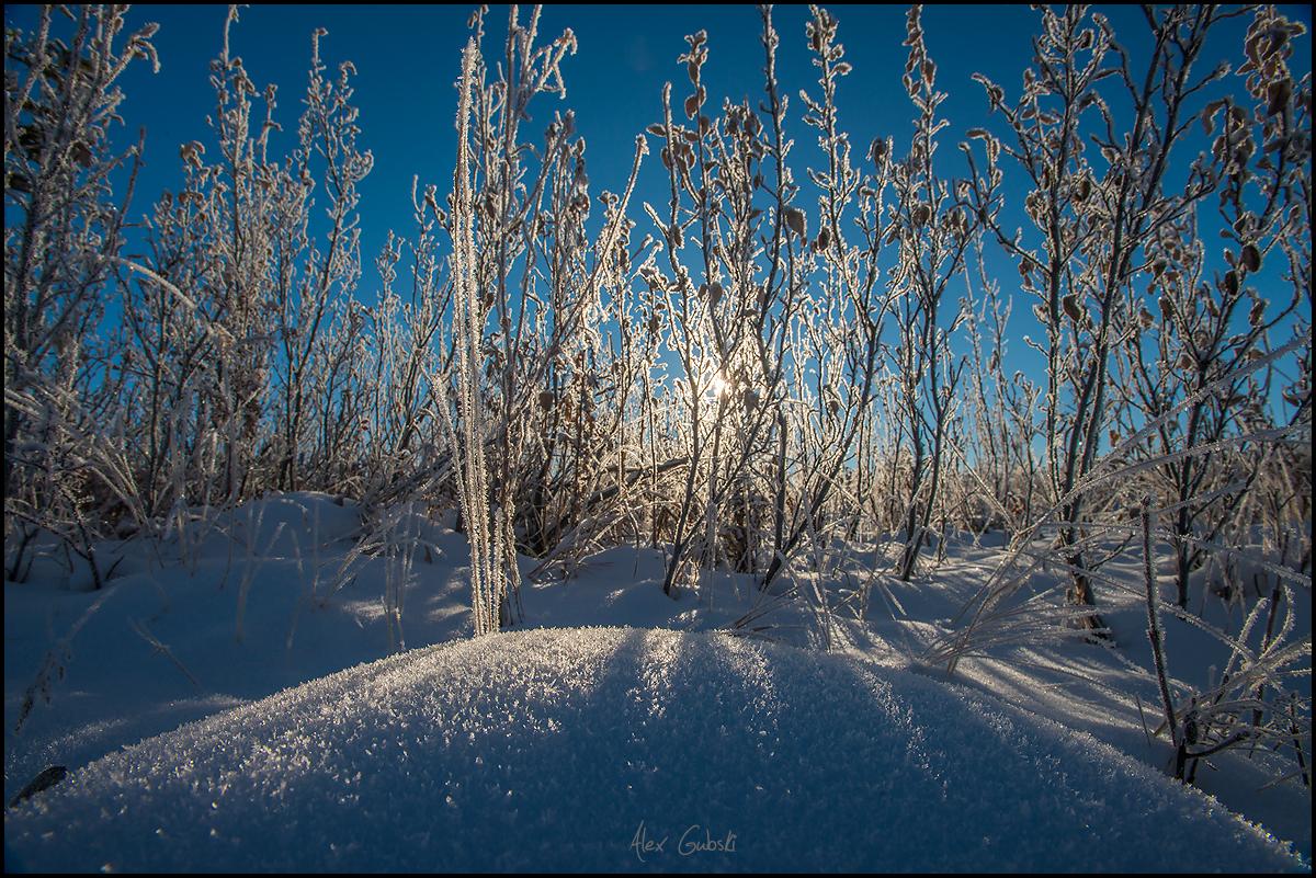 116_Calgary_photographer_Alexander_Gubski