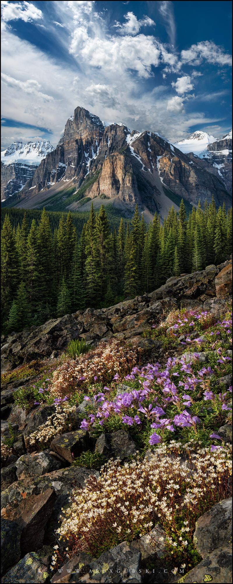 653_Calgary_photographer_Alexander_Gubski