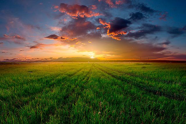 Alex Gubski Fine Art Prairie Sun