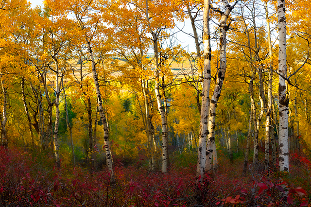 Alex Gubski Fine Art Autumn Glory